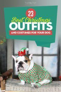 Top 23 costume de Crăciun și costume de Crăciun