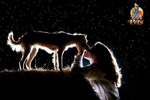 Topul # 28: puterea vindecătoare a câinilor
