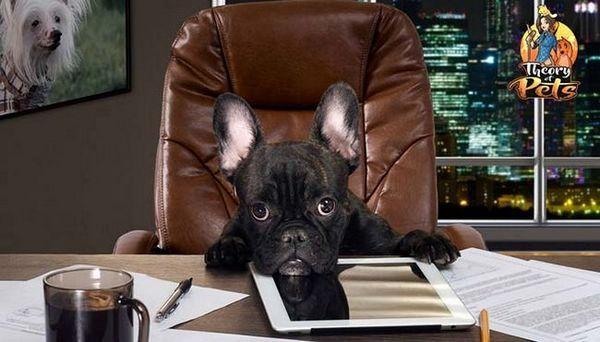 Top # 35: cum să vă comercializați produsele pentru câini