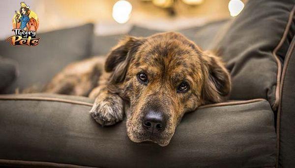 Top # 38: sfaturile copiilor cu privire la tratarea anxietății la câini