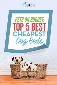 Top 5 cele mai bune paturi ieftine pentru câini sub 20 de dolari