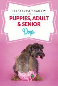 Top 5 cele mai bune scutece pentru câini (femele, masculi și cățeluși)