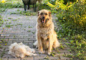 Top 5 cele mai bune produse de îndepărtare a părului pentru câini