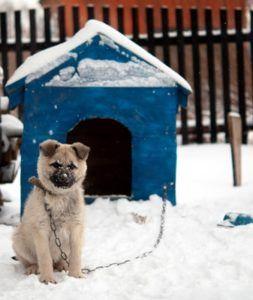Top 5 cele mai bune incalzitoare de case pentru iarna