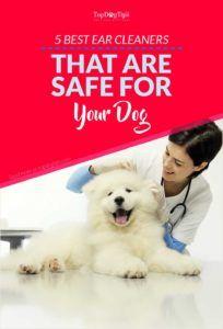 Top 5 cele mai bune produse pentru curățarea urechilor pentru câini