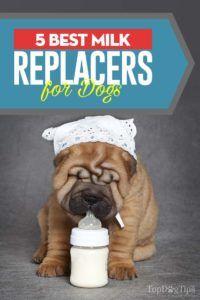Top 5 cele mai bune înlocuitori de lapte pentru câini