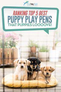 Top 5: cele mai bune pixuri pentru câini și jucării pentru câini