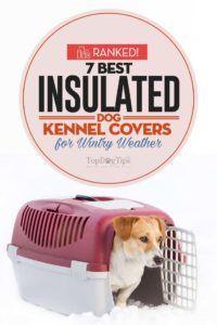 Top 7 cele mai bune cusaturi de câine izolate
