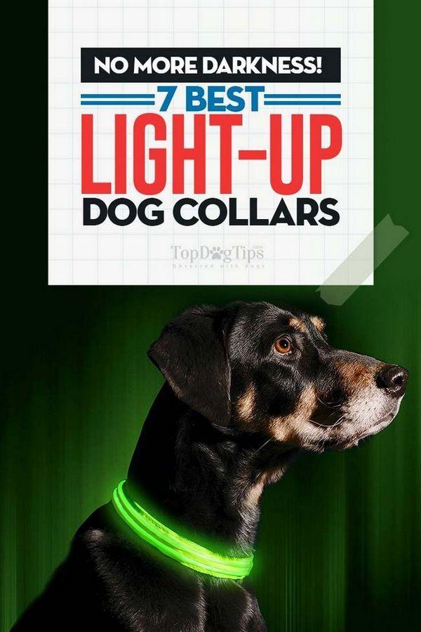 Top 7 cele mai bune coliere pentru câini