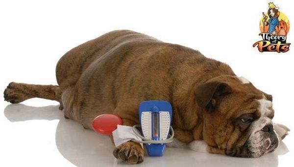 Top # 8: se ocupă cu diabetul zaharat cu diabet zaharat, Rachel poul, rvt