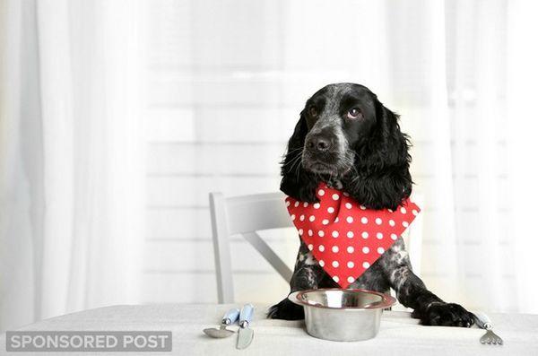 Proteine unice care alimentează bine câinii