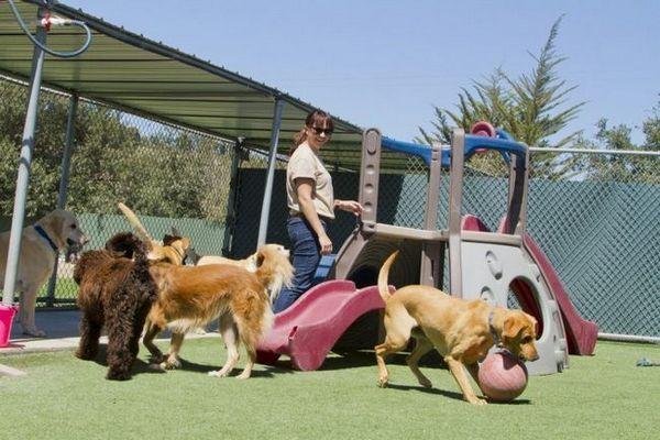 Ce trebuie să știți înainte de a începe o afacere de îmbarcare a câinelui