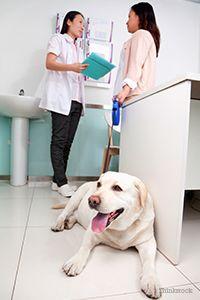 Veterinarul și proprietarul vorbesc în timp ce câinele se află pe podea