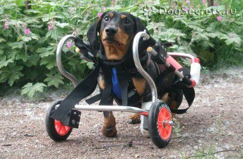 Tipuri de scaune cu rotile pentru câini