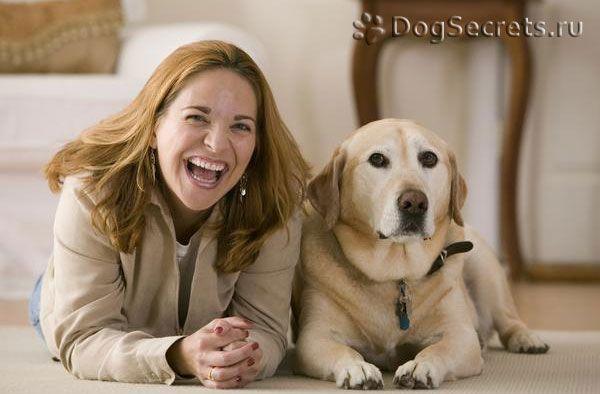 Ce boli puteți obține de la câini?