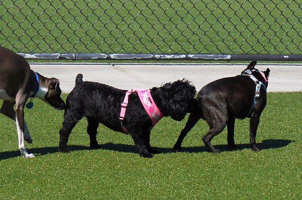 De ce câinii înghit fundul?