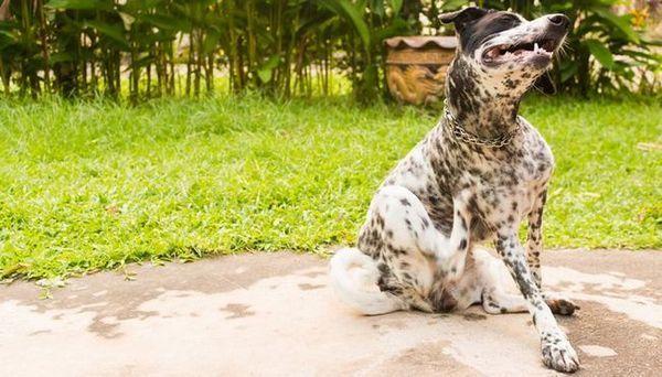 De ce este mâncatul câinelui meu? 4 motive științifice și tratamente dovedite