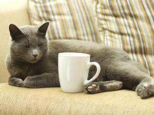 Pisica cu cafea