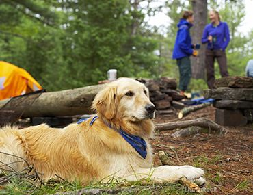 Câine în pădure